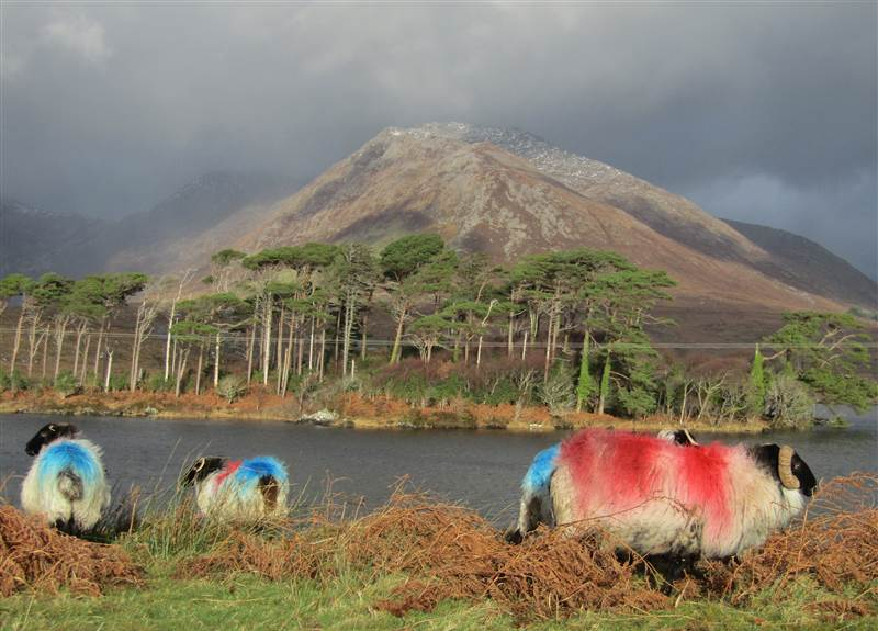 Lough Derryclare (12)